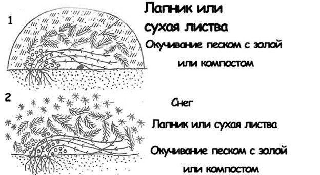 shema-ukritie-klematisa