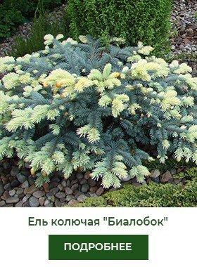 el-kolyuchaya-biolobok