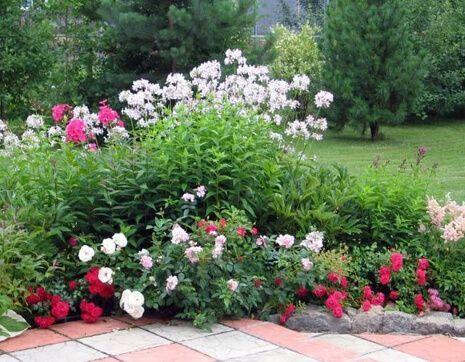 pioni-v-cvetnike